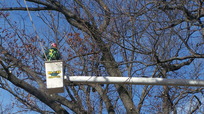 Tree Pruning in Camden County, NJ