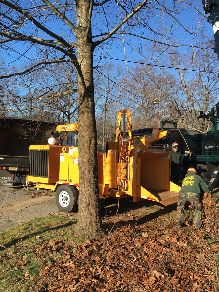 Using Wood Chipper after Tree Removal