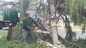 Cutting Tree with Chainsaw in South Jersey