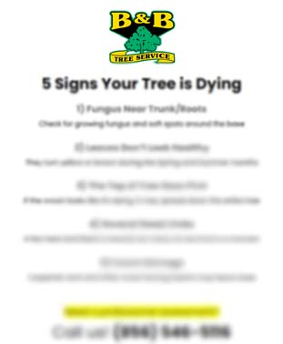 5 Signs Your Tree is Dying Giveaway